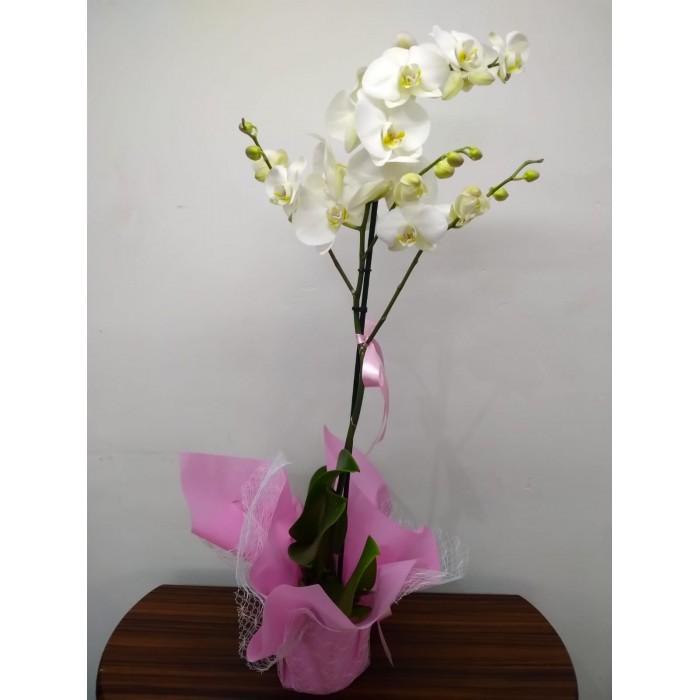 VİP Tek Dal Beyaz Orkide