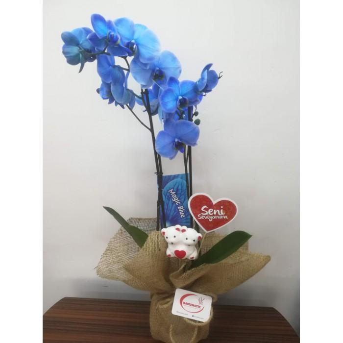 Vip Çift Dallı Mavi Orkide